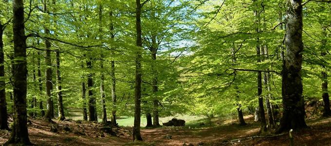 Parque Natural de Urbasa
